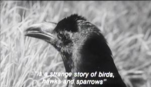 The Hawks and the Sparrows story