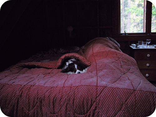in the people bed at the cabin, 2006