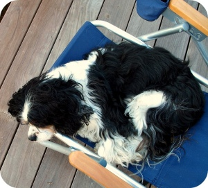 napping on the deck, 2008