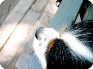 snout on a park bench