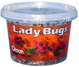tub of ladybugs