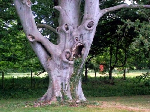 the ugliest tree