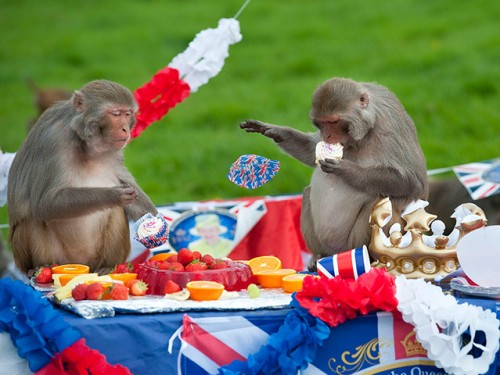 monkeys at Jubilee tea party
