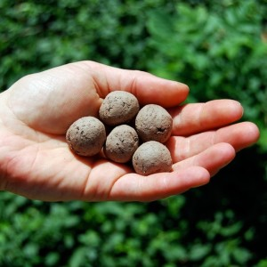 seed bombs for cats and dogs